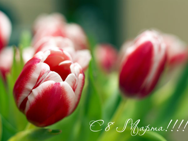 pozdravleniya-na-8-marta-dlya-teshhi-2