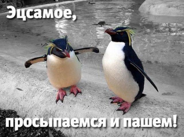 statusy-pro-utro-dlya-socsetej-utrennie-citaty-i-pozhelaniya-11