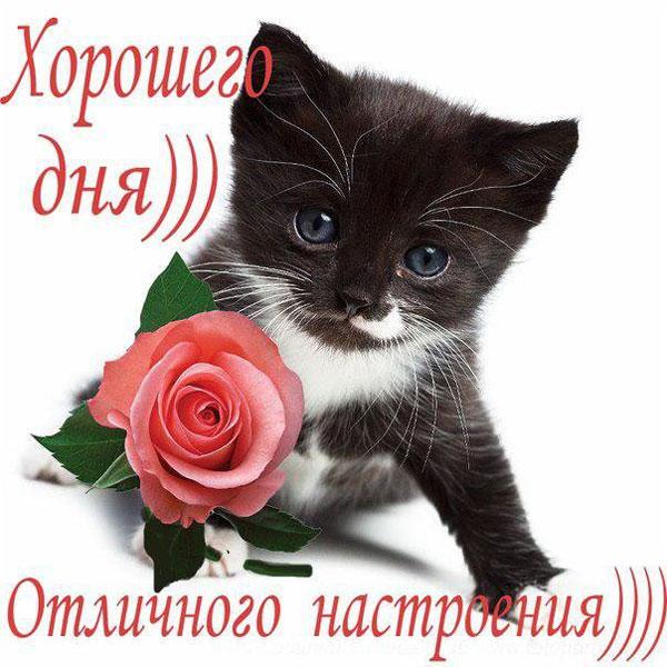 xoroshego-dnya-i-otlichnogo-nastroeniya-otkrytki-s-pozhelaniyami-5