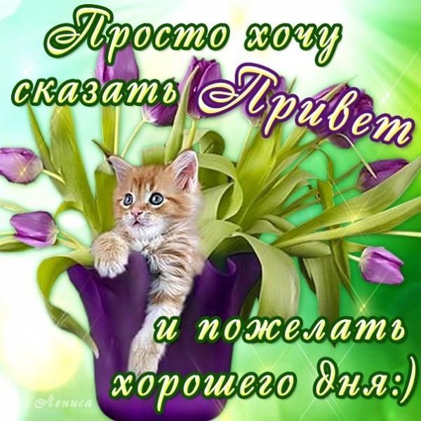 xoroshego-dnya-i-otlichnogo-nastroeniya-otkrytki-s-pozhelaniyami-6